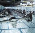 Einmalig: QFD Zertifizierung für 230 EUR durch QFD-Elite am 26.-27. März in Kassel
